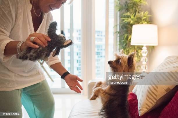 """mujeres lgbtq maduras jugando con el perro en la sala de estar. - """"martine doucet"""" or martinedoucet fotografías e imágenes de stock"""