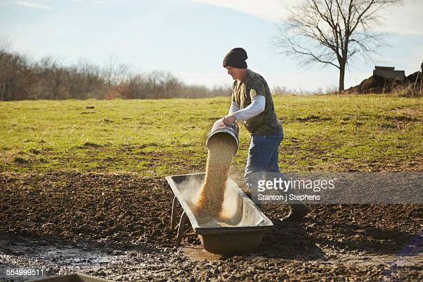 mature male farmer pouring grain into feeding trough in field - trough stock photos and pictures