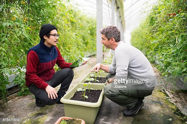 Mature male farmers using a digital tablet