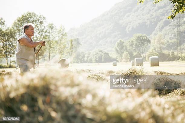 mature male farmworker raking harvest in field - landwirtschaftliche tätigkeit stock-fotos und bilder