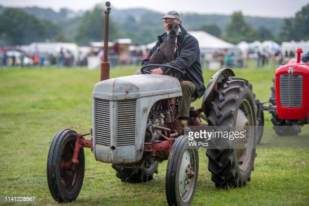 Mature male holds onto dog while driving vintage tractor Masham North Yorkshire UK