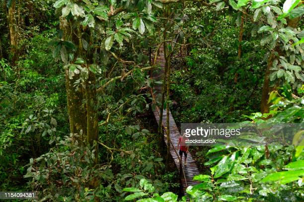 mature male tourist hiking in rainforest in mulu national park - parco nazionale foto e immagini stock