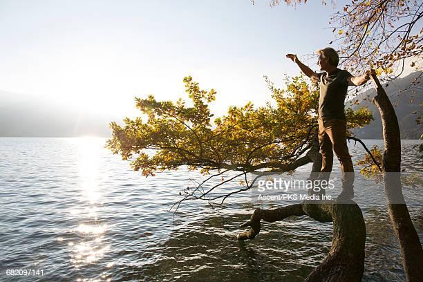 Mature man balances on tree limb,looks across lake
