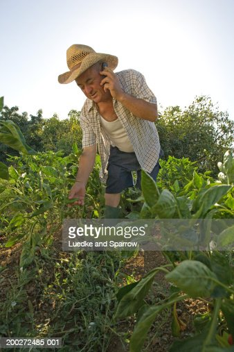 Mature Man Bent Over In Vegetable Garden Using Mobile -7801