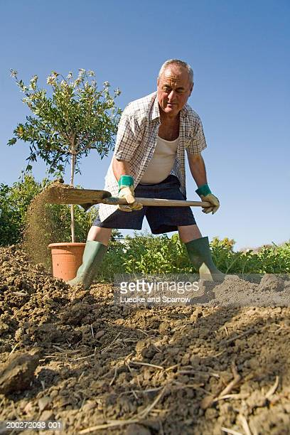Mature man bent over shovelling earth in garden