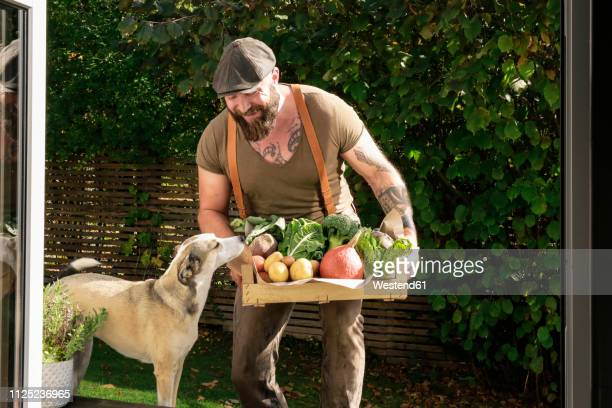 mature man carrying crate with vegetables in his garden - vegan food stock photos and pictures