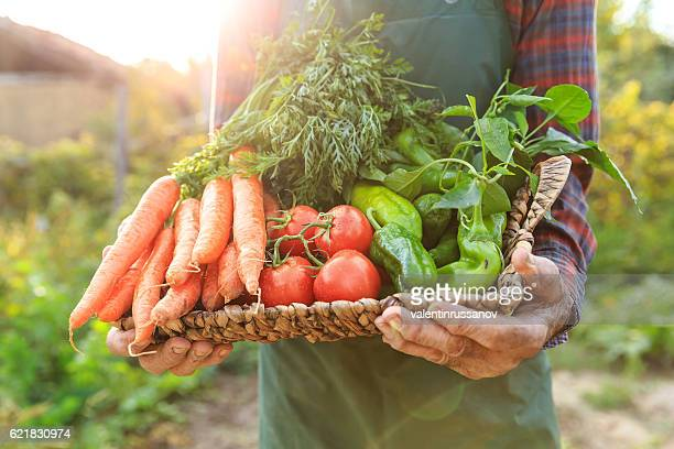 Mature man carrying vegetables in basket