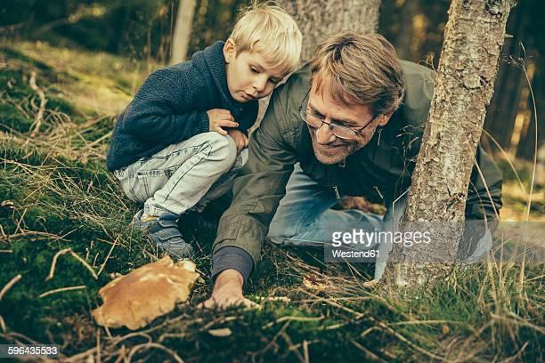 Mature man collecting bay bolete mushrooms with little boy