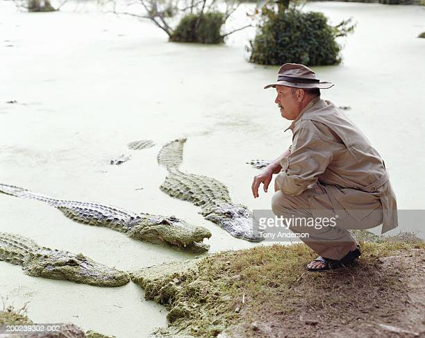 Mature man crouching in front of alligators, side view