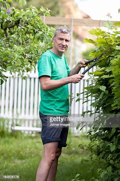 Mature man cutting hedge
