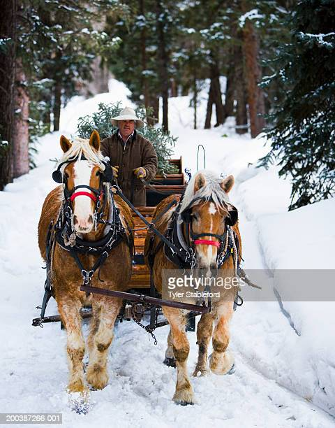 mature man driving team of horses and sleigh through snow - cowboy christmas stock pictures, royalty-free photos & images