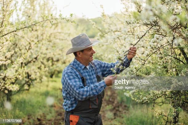 Mature man farmer in orchard