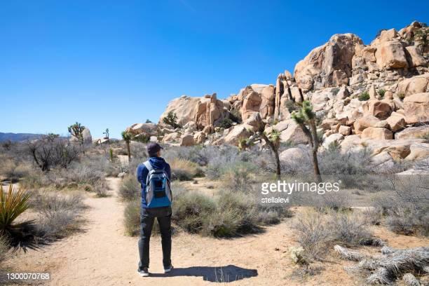 mature man hiking looking at desert view in joshua tree national park, california - stellalevi stock pictures, royalty-free photos & images