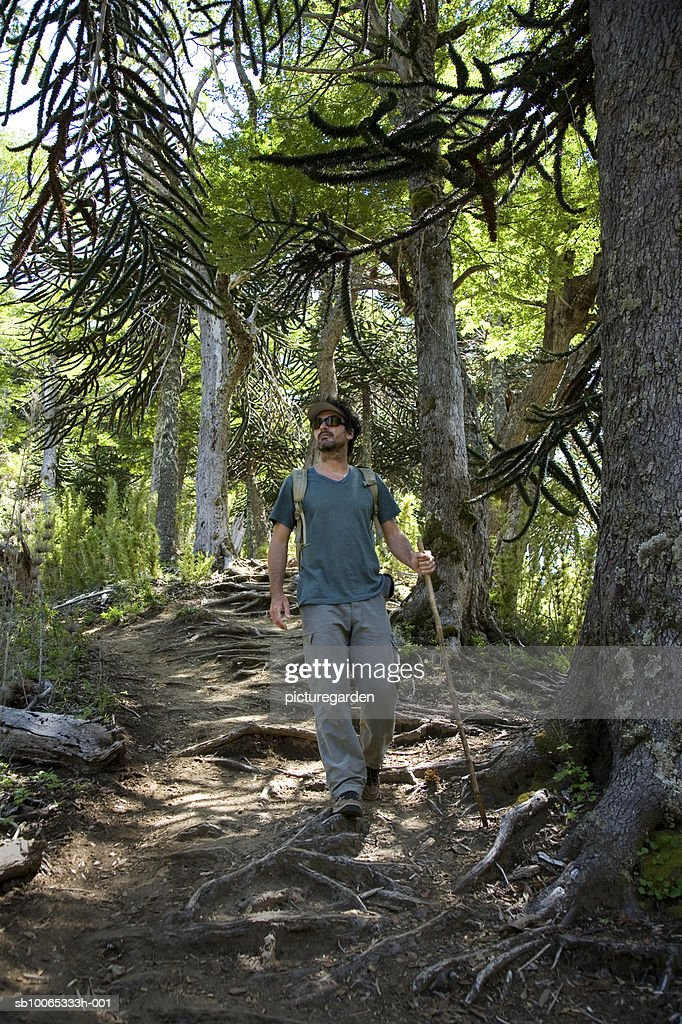 Mature man hiking through forest : Foto stock