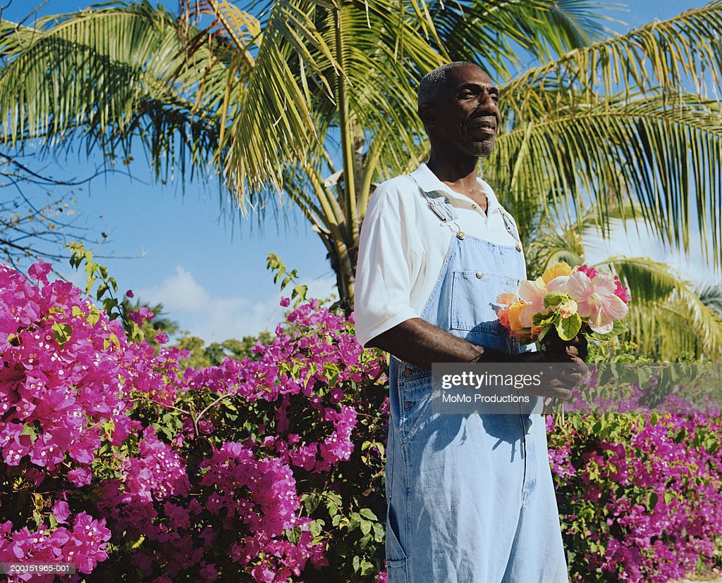 Mature man holding bunch of hibiscus flowers stock photo getty images mature man holding bunch of hibiscus flowers rosa sinensis stock photo izmirmasajfo