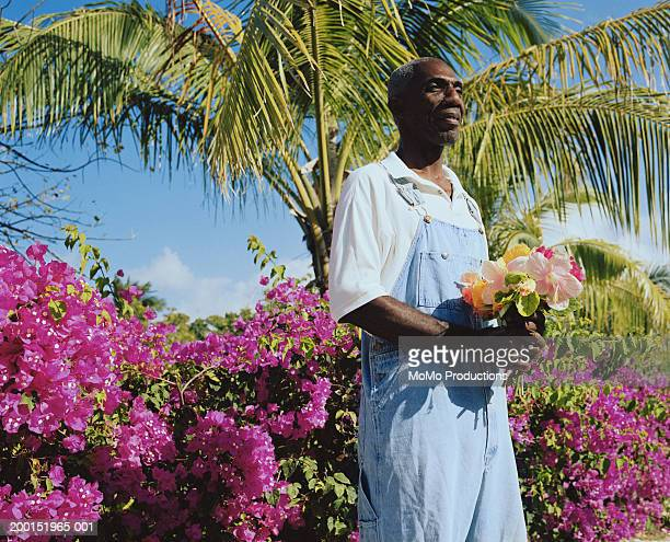 Mature man holding bunch of hibiscus flowers (Rosa sinensis)