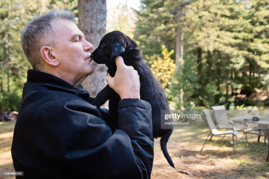 Mature man holding purebred flat-coated retriever puppy. : Stock Photo