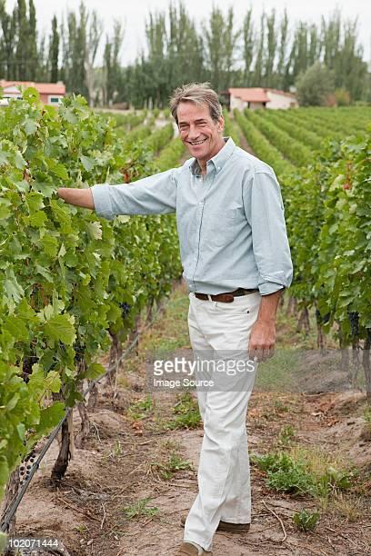 Mature man in a vineyard