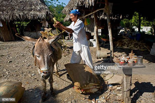 Mature man loading sack of corn on a donkey, Papantla, Veracruz, Mexico
