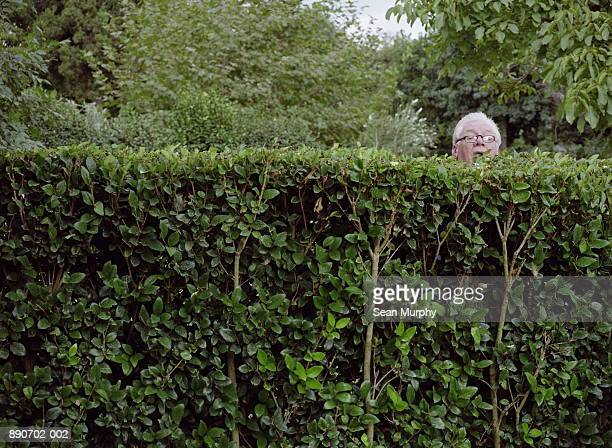 Mature man looking over neighbour's hedge