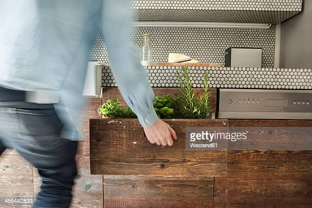 Mature man opening drawer with herbs