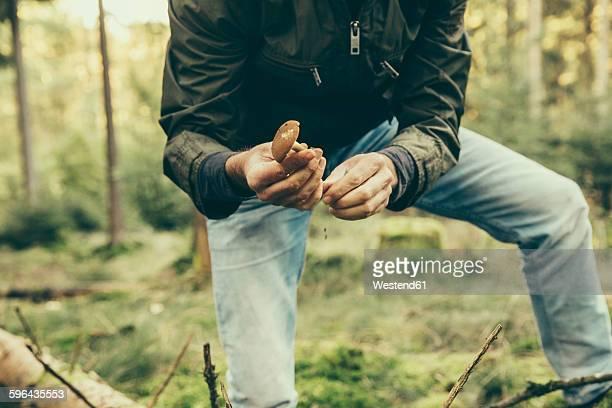 Mature man showing bay bolete mushroom, boletus badius