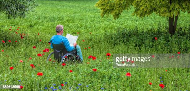 mature man sitting in wheelchair in blooming meadow reading book - disabled access stock photos and pictures