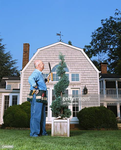 mature man standing next to shrub with pruning tool - トピアリー ストックフォトと画像
