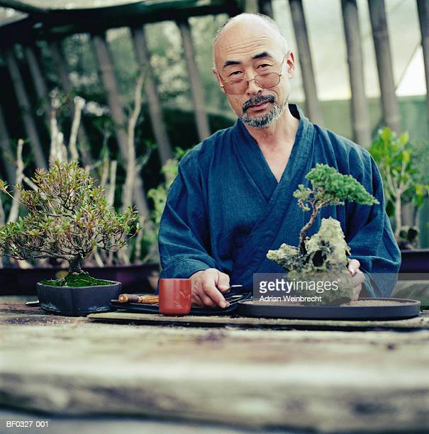 mature man tending bonsai trees, portrait - bonsai tree stock pictures, royalty-free photos & images
