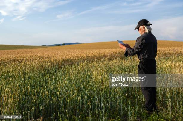mature man using a digital tablet in a crop field - johnfscott stock pictures, royalty-free photos & images