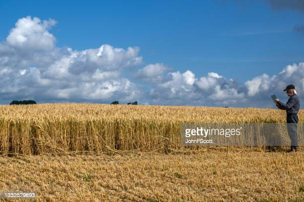 mature man using a digital tablet in a crop field - working seniors stock pictures, royalty-free photos & images