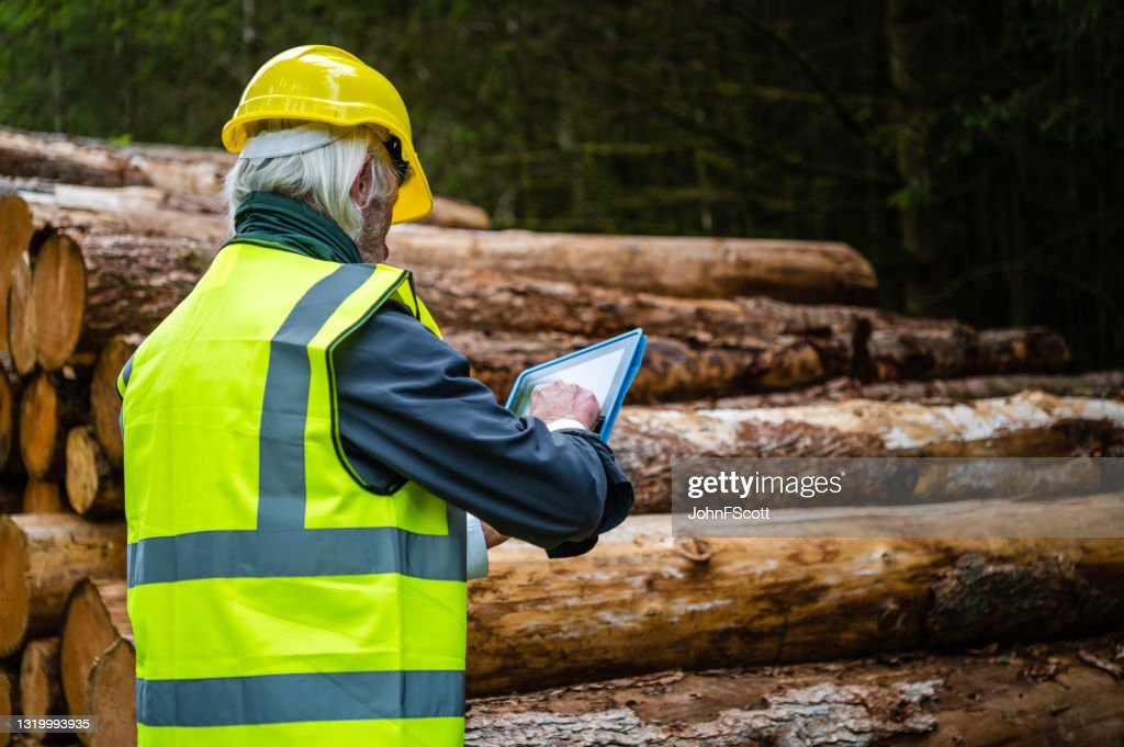 Mature man using a digital tablet in a forest : Stock Photo
