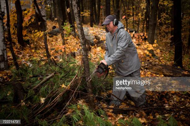 Mature man using chainsaw in autumn forest, Upstate New York, USA