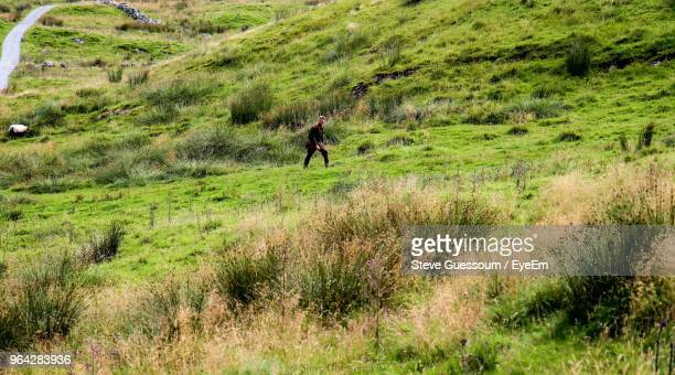 mature man walking on grassy mountain - steve guessoum stockfoto's en -beelden
