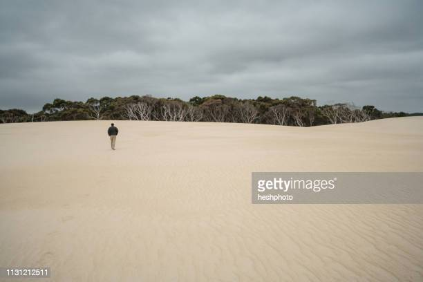 mature man walking on sand dunes, tasmania - heshphoto stock pictures, royalty-free photos & images
