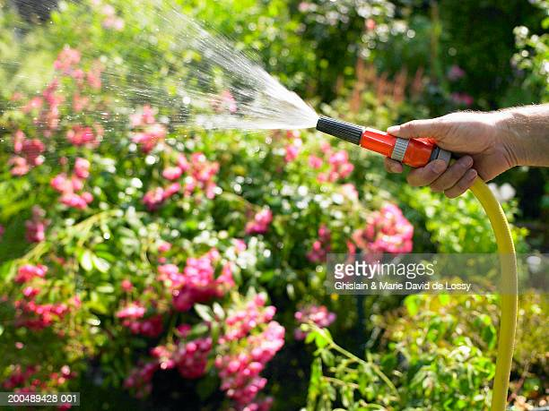 mature man watering garden with hose - watering stock pictures, royalty-free photos & images