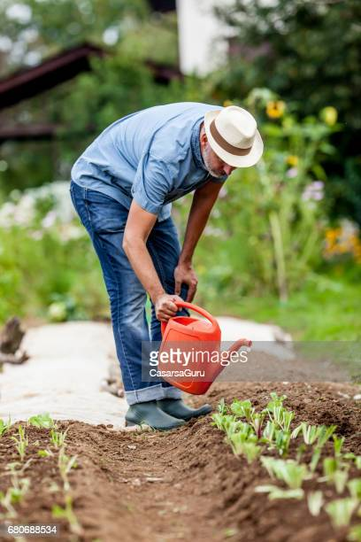mature man watering his organic vegetable garden - older woman bending over stock pictures, royalty-free photos & images