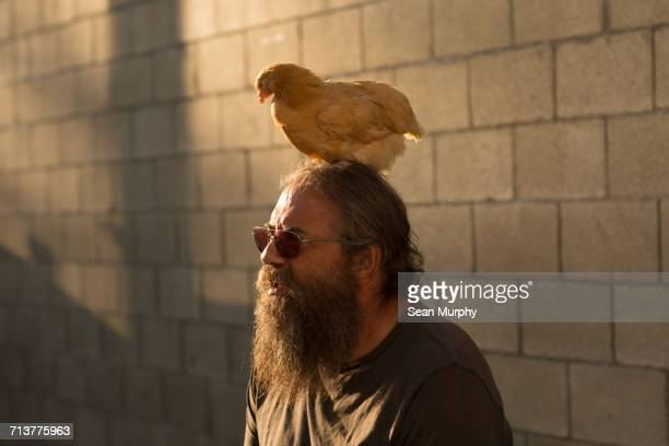 Mature man with beard and sunglasses, outdoors, chicken sitting on head