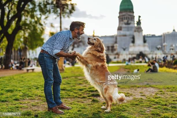 日没で公園を歩くゴールデンレトリバー犬と成熟した男 - ゴールデンレトリバー ストックフォトと画像