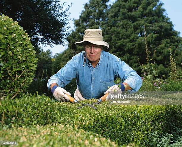mature man with hat on trimming shrubs - hedge stock pictures, royalty-free photos & images