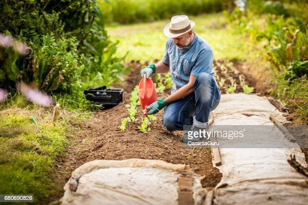 Mature Man Working In His Vegetable Garden