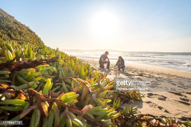 mature, multi-ethnic couple beachcombing and exploring secluded beach, california, usa - exotic_species stock pictures, royalty-free photos & images
