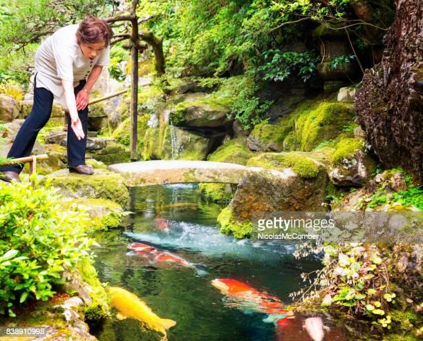 madura mulher japonesa sênior alimentando koy enorme peixe no jardim japonês - koi carp - fotografias e filmes do acervo