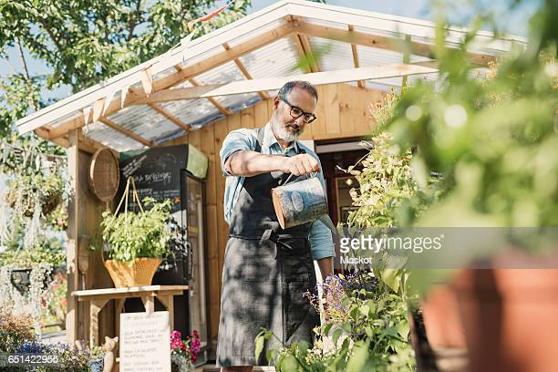 Mature store owner watering plants in garden against shop