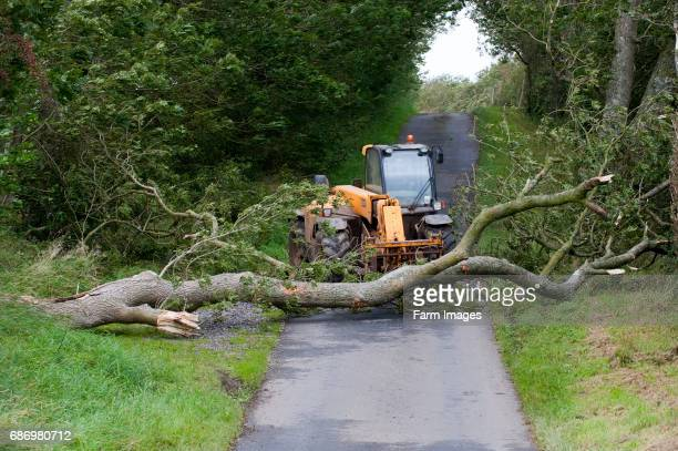 mature tree fallen across road in storm being moved by farmer with a loader
