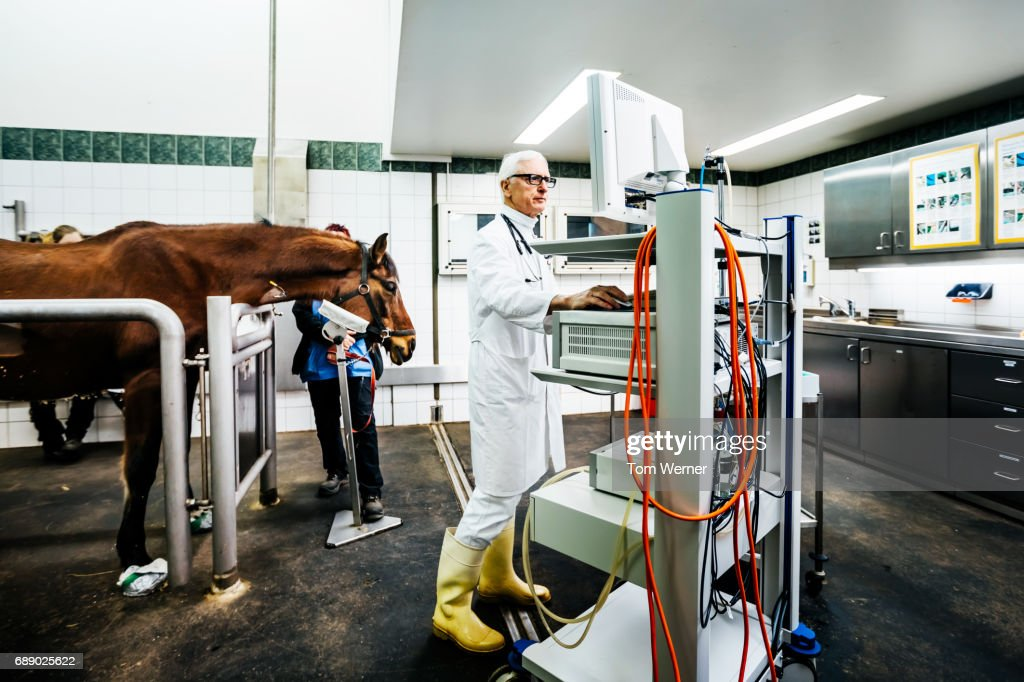 Mature veterinarian standing on computer and preparing endoscope : Stock Photo