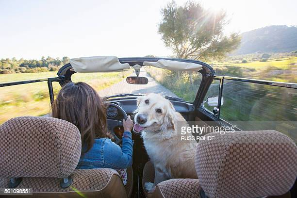 Mature woman and dog, in convertible car, rear view