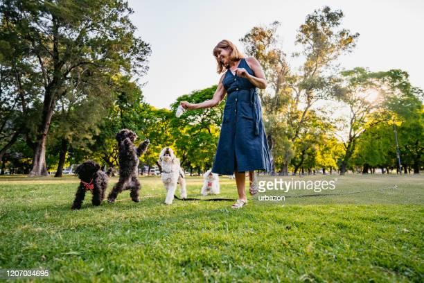 公園で成熟した女性と彼女の犬 - 愛玩犬 ストックフォトと画像