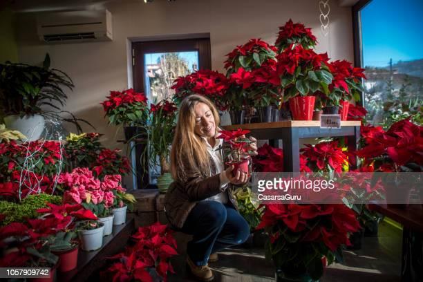 mujer comprando flores de la poinsettia en la tienda de la flor madura - flor de pascua fotografías e imágenes de stock