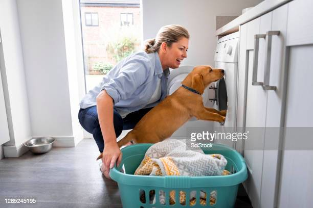 mature woman doing the laundry with puppy - washing machine stock pictures, royalty-free photos & images